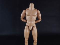 1/6 Scale Muscular Male Body