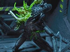 Aliens Series 12 Alien Warrior (Battle Damaged/Blue) Figure