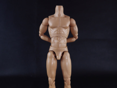 1/6 Scale Muscular Male Body (Tall)
