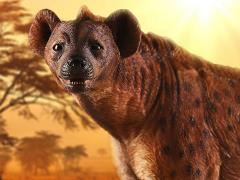 "Crocuta crocuta ""Spotted Hyena"" (Brown) 1/6 Scale Figure"
