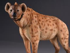 "Crocuta crocuta ""Spotted Hyena"" (Yellow-Brown) 1/6 Scale Figure"