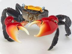 Revoltech RevoGeo Chiromantes haematocheir (Red-Clawed Crab)